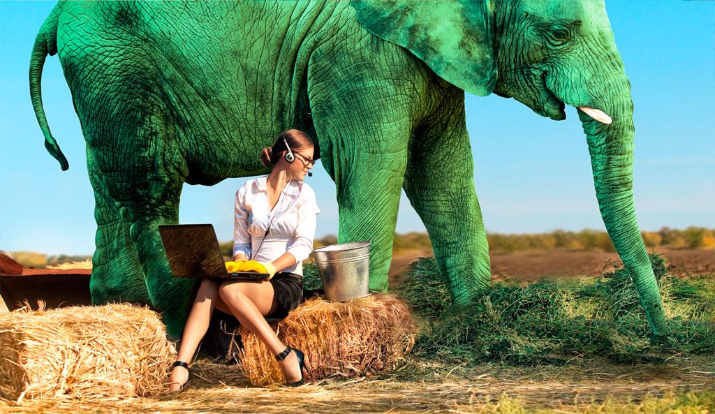 Спасибо от Сбербанка: можно ли подоить слона